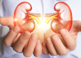 Quiz: Are Your Kidneys Doing Their Job?