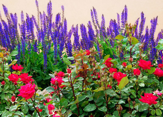 How to Keep Your Garden Colorful All Summer Long