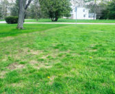 Now's the Time to Fix Your Lawn's Bare and Thin Spots