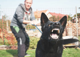 How to Deal with an Aggressive Dog—Yours or Someone Else's