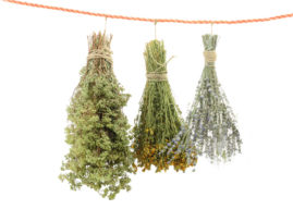 How to Harvest and Dry Garden Herbs